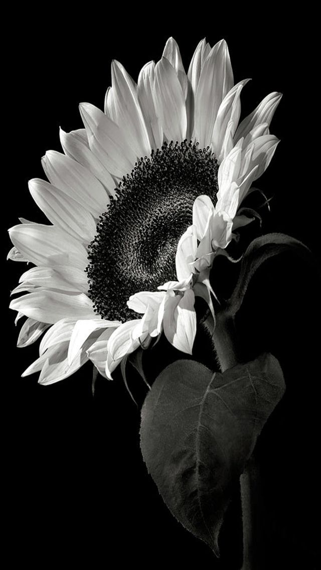 Black and white photography iphone wallpapers nature tap to check out more iphone wallpapers mobile9