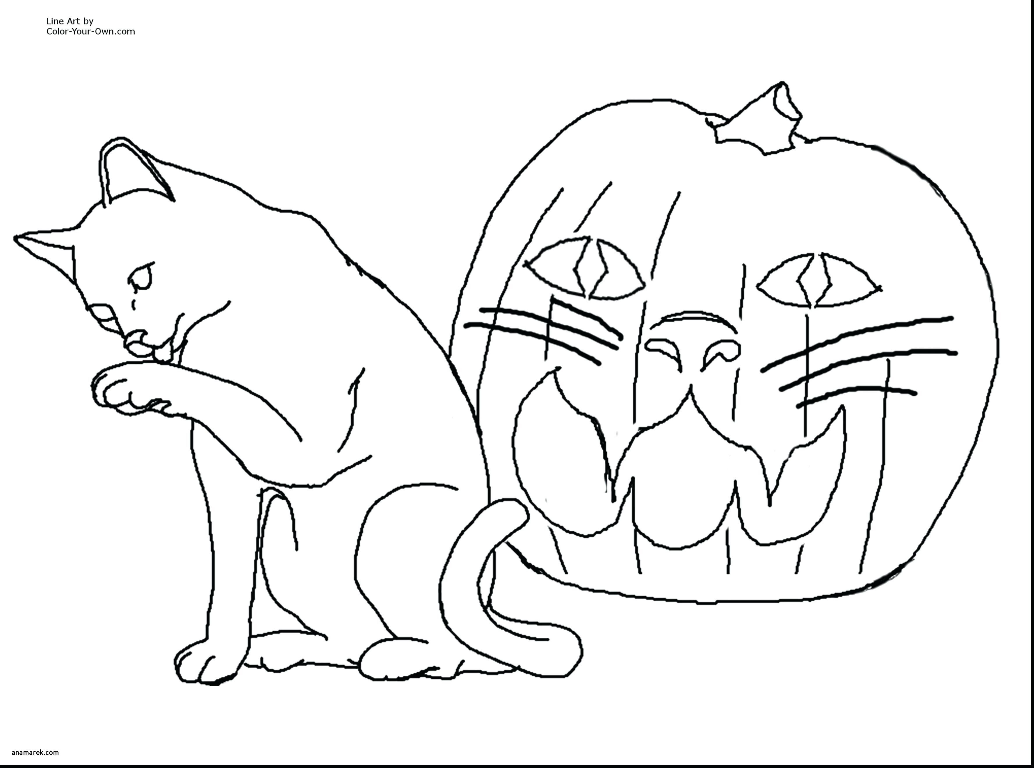 Halloween Witch and Black Cat coloring pages for kids