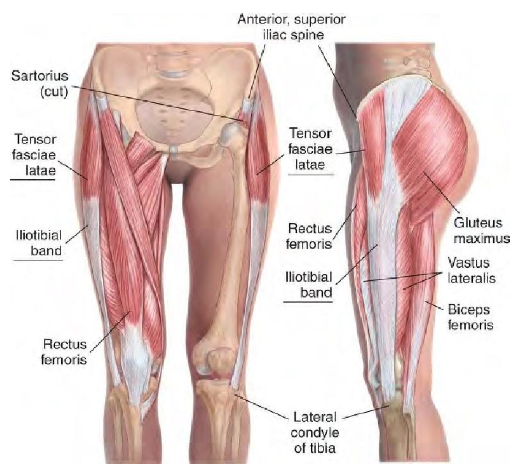 Products | Muscles, Fascia blaster and Plantar fasciitis