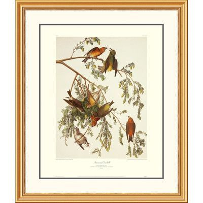 """Global Gallery American Crossbill by John James Audubon Framed Painting Print Frame Color: Beaded Gold, Size: 40"""" H x 34"""" W x 1.5"""" D"""