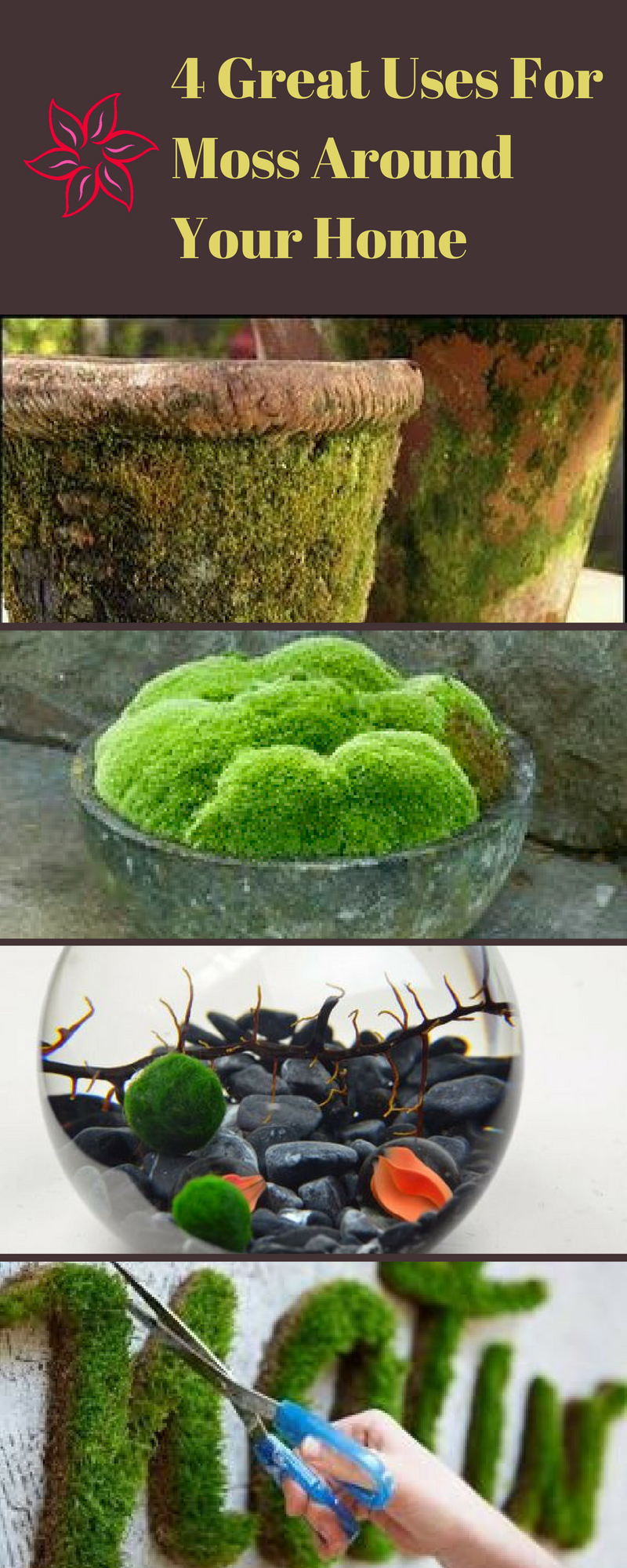How To Grow Moss On Pots And Rocks | Gardens, Container water ...