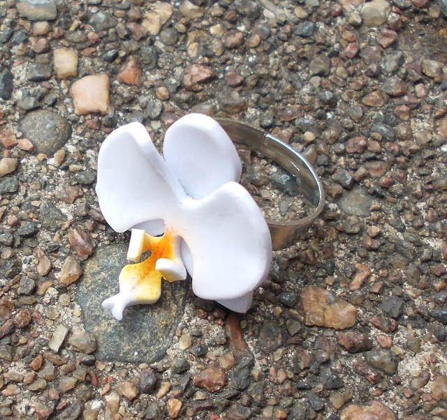 Four-eared bunny: Orkideasormus