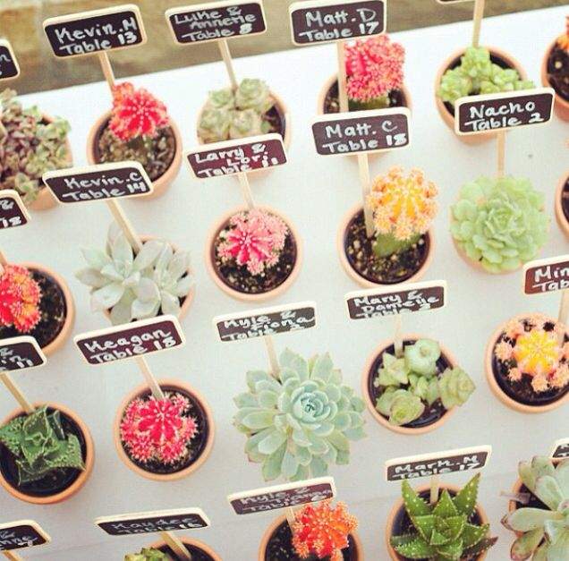 Gift For Wedding Guests Thank You: Succulents Wedding Place Cards. Wedding Guest Gift
