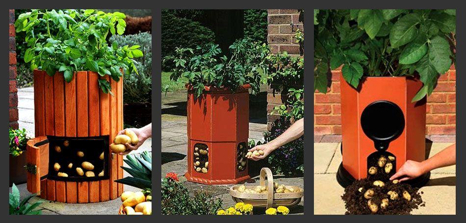 záhrada, zemiakový sudy, zemiaky, rastúce, záhradníctvo