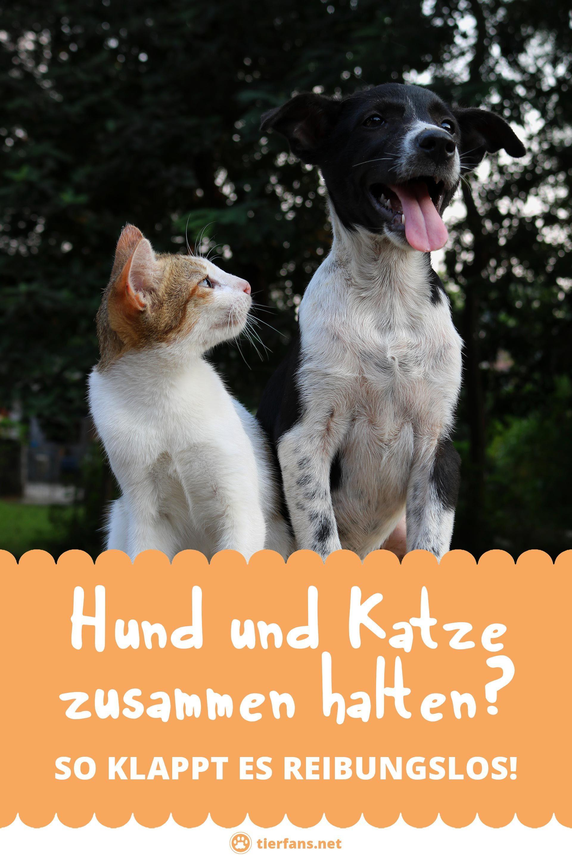 Wer Behauptet Man Konne Entweder Nur Teamhund Oder Teamkatze