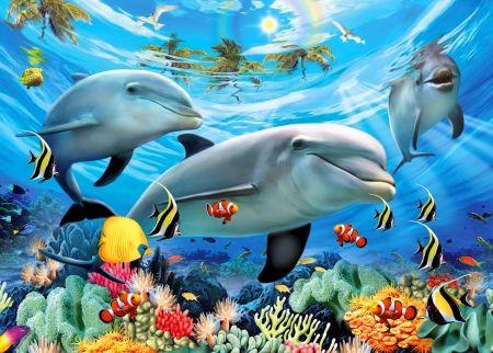 Caribbean underwater world other wallpaper id 1719730 desktop underwater publicscrutiny Images
