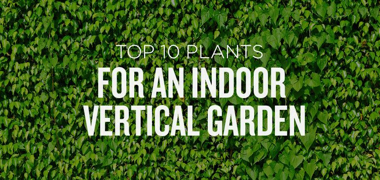 Top 10 Plants For An Indoor Vertical Garden Gardens Are Popping Up Everywhere From