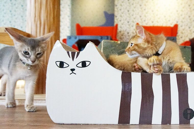 モンタ・お店案内   東京・浅草 お洒落な猫カフェ/もんた MONTA  Monta Cat Cafe (Asakusa)