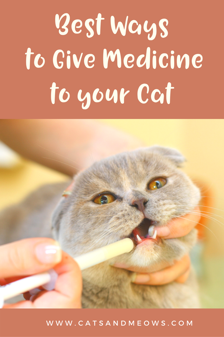 The Best Ways To Give Medicine To Your Cat Cats And Meows Cat Medicine Cat Care Tips Cat Care