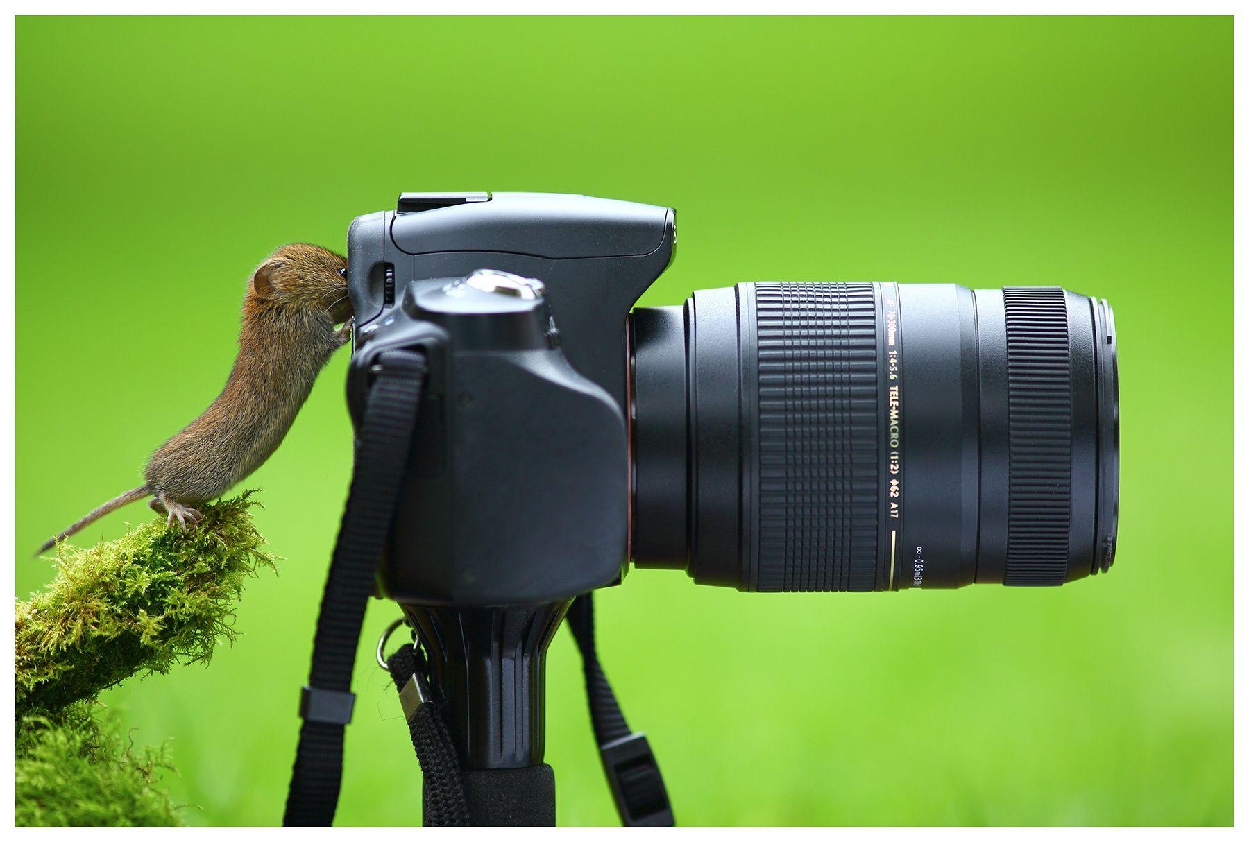 Фотоаппарат картинки смешные, надписью