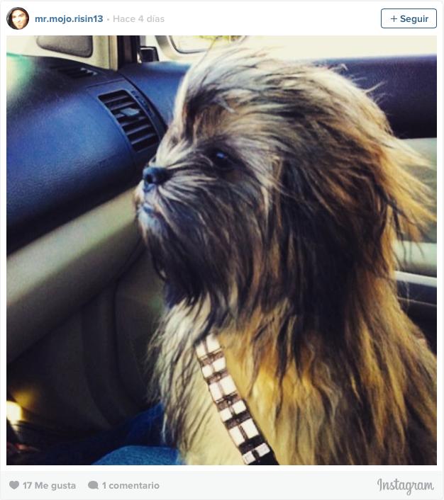 Wookie doggie