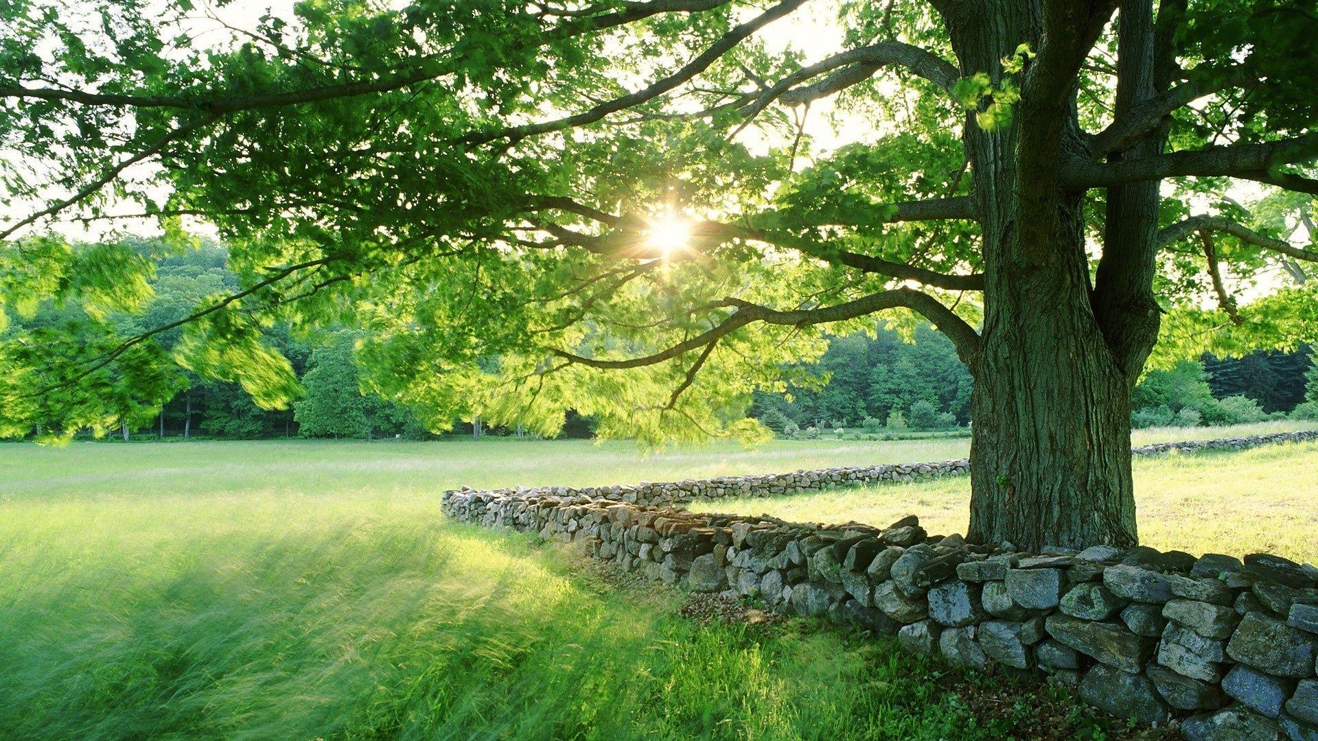 summer landscape image wallpaper - photo #40