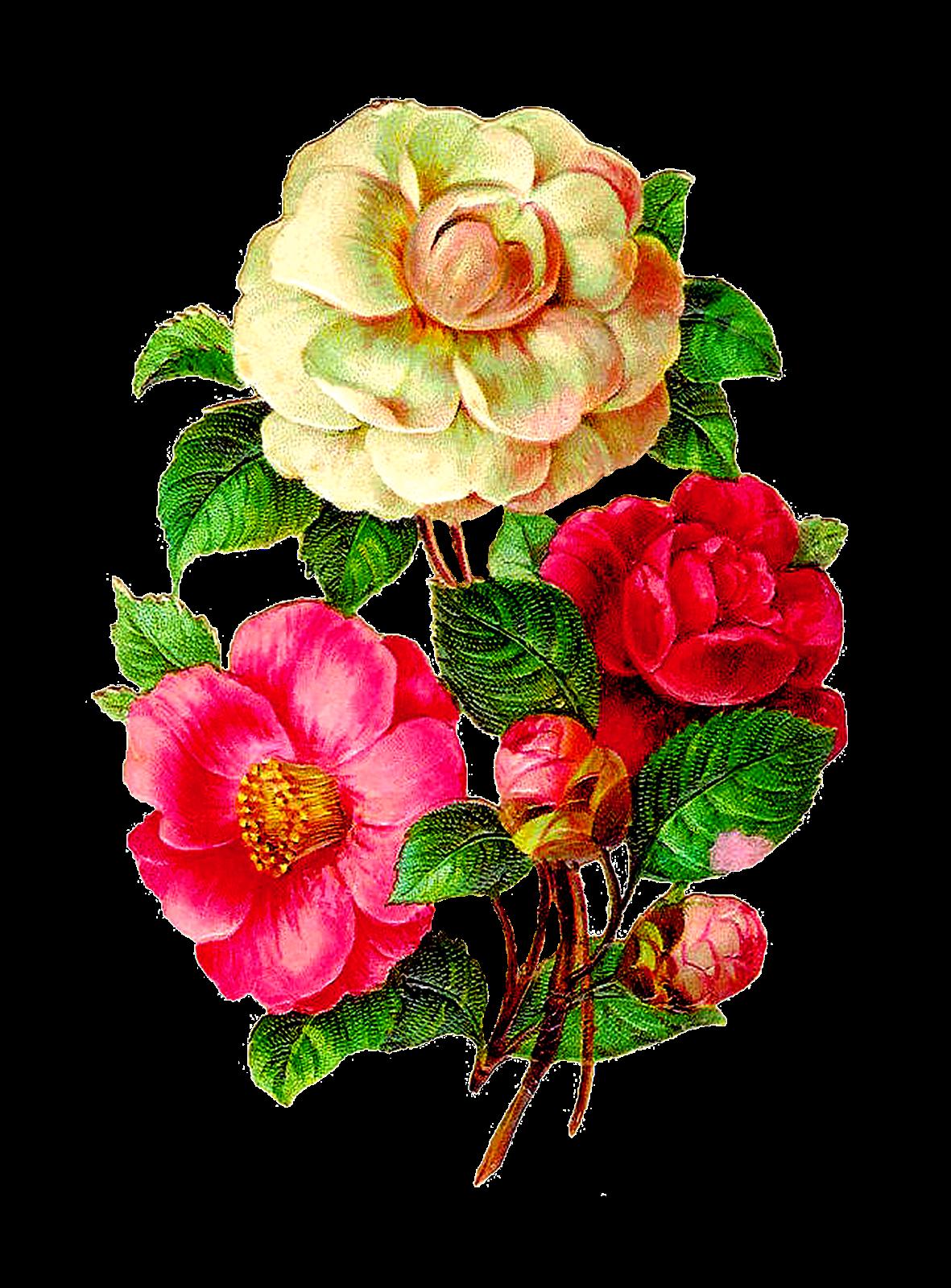Afbeeldingsresultaat voor vintage flowers illustration