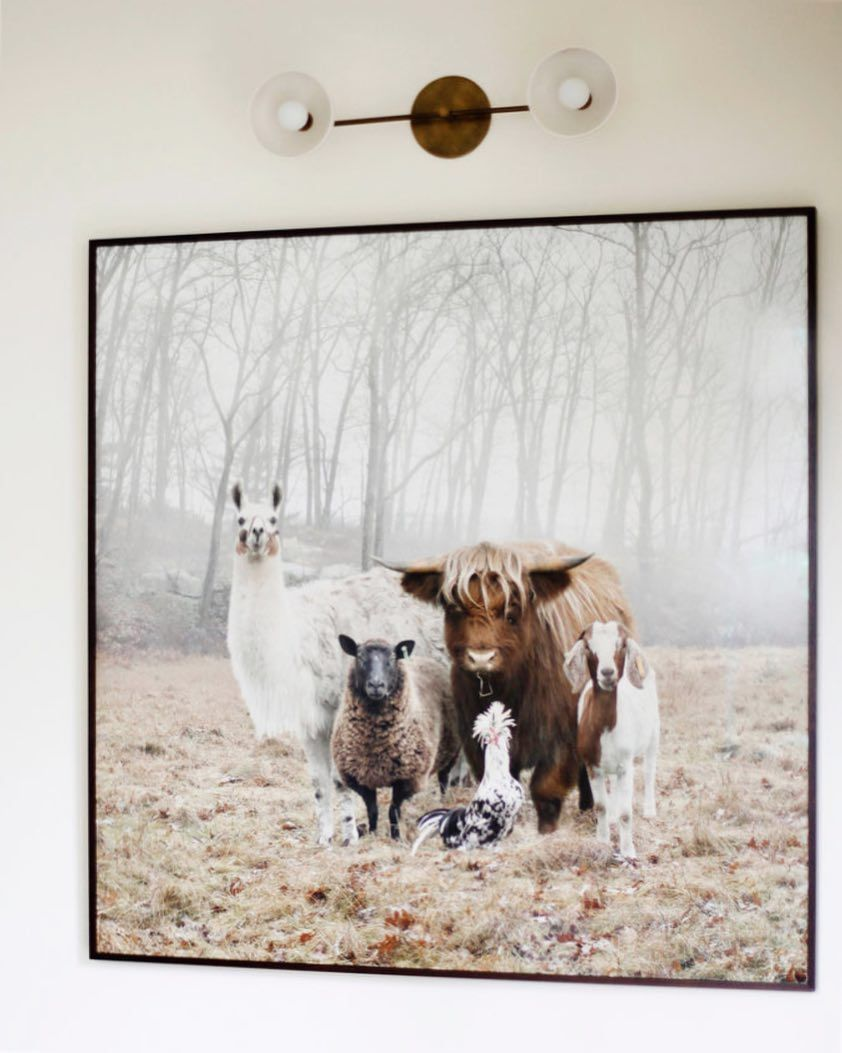 Chicken On Goat On Sheep Metal Wall Art
