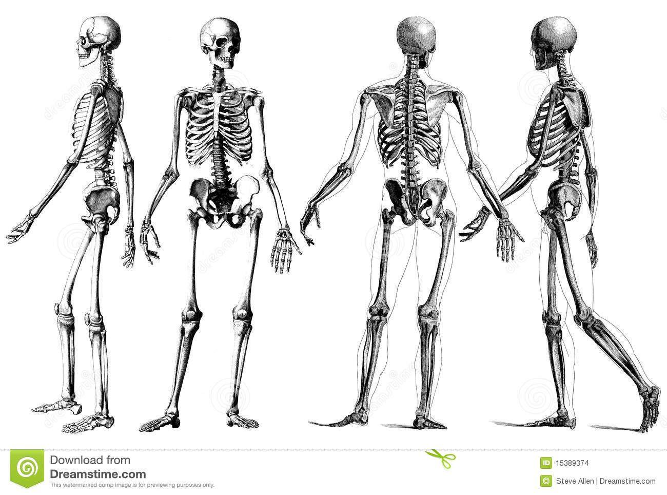 esqueletOS DE PERSONAS EN BLANCO Y NEGRO - Buscar con Google ...