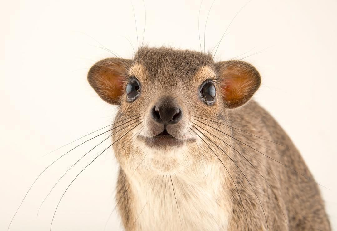 """National Geographic on Instagram: """"photo by @joelsartore 