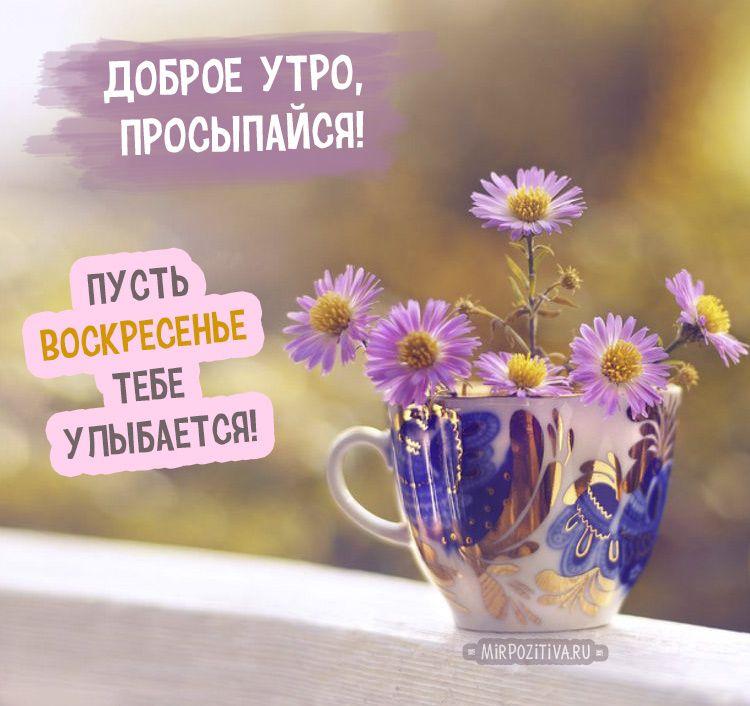 Смешные картинки «Доброе утро, воскресенье» (35 фото ...