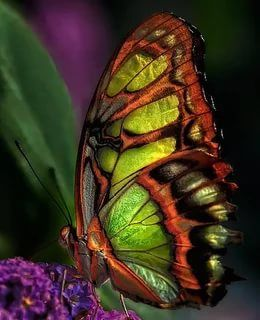 фото бабочки: 14 тыс изображений найдено в Яндекс ...