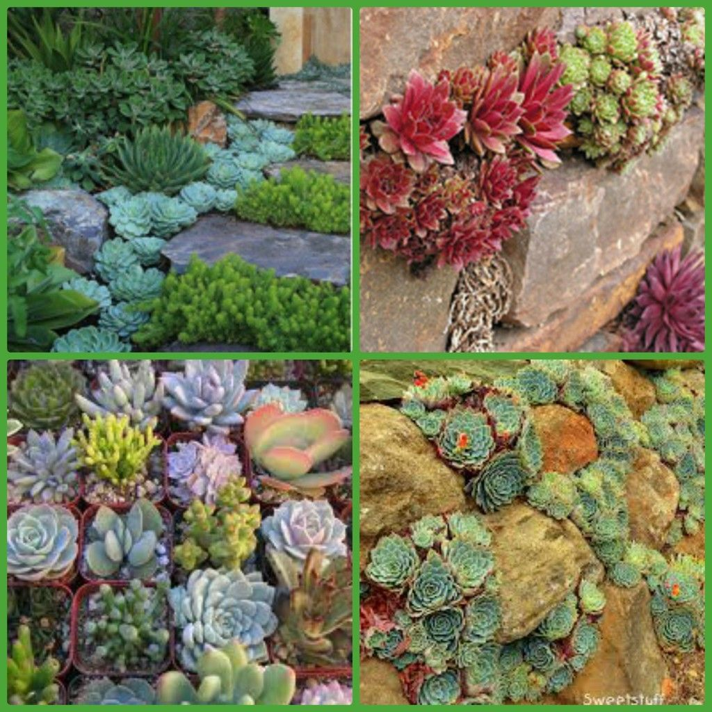 Top 32 Diy Fun Landscaping Ideas For Your Dream Backyard: Adding Succulent Plants To Your Rock Wall #TodaysEveryMom