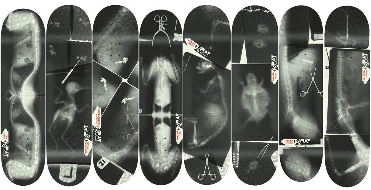 X-ray. Alien Workshop