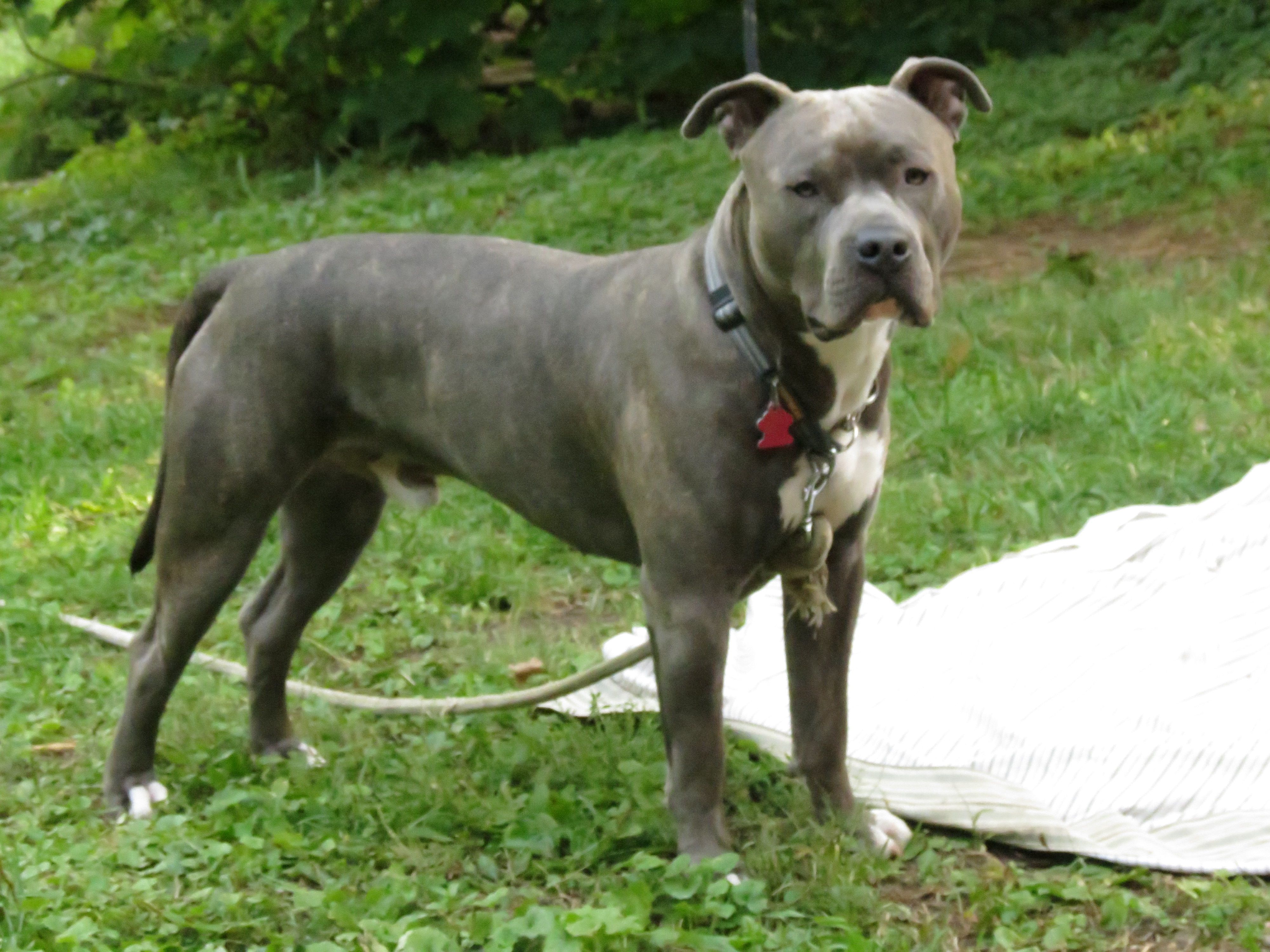 10 Months Knight Sabre The Thunderfoot Blue Nose Reverse Blue