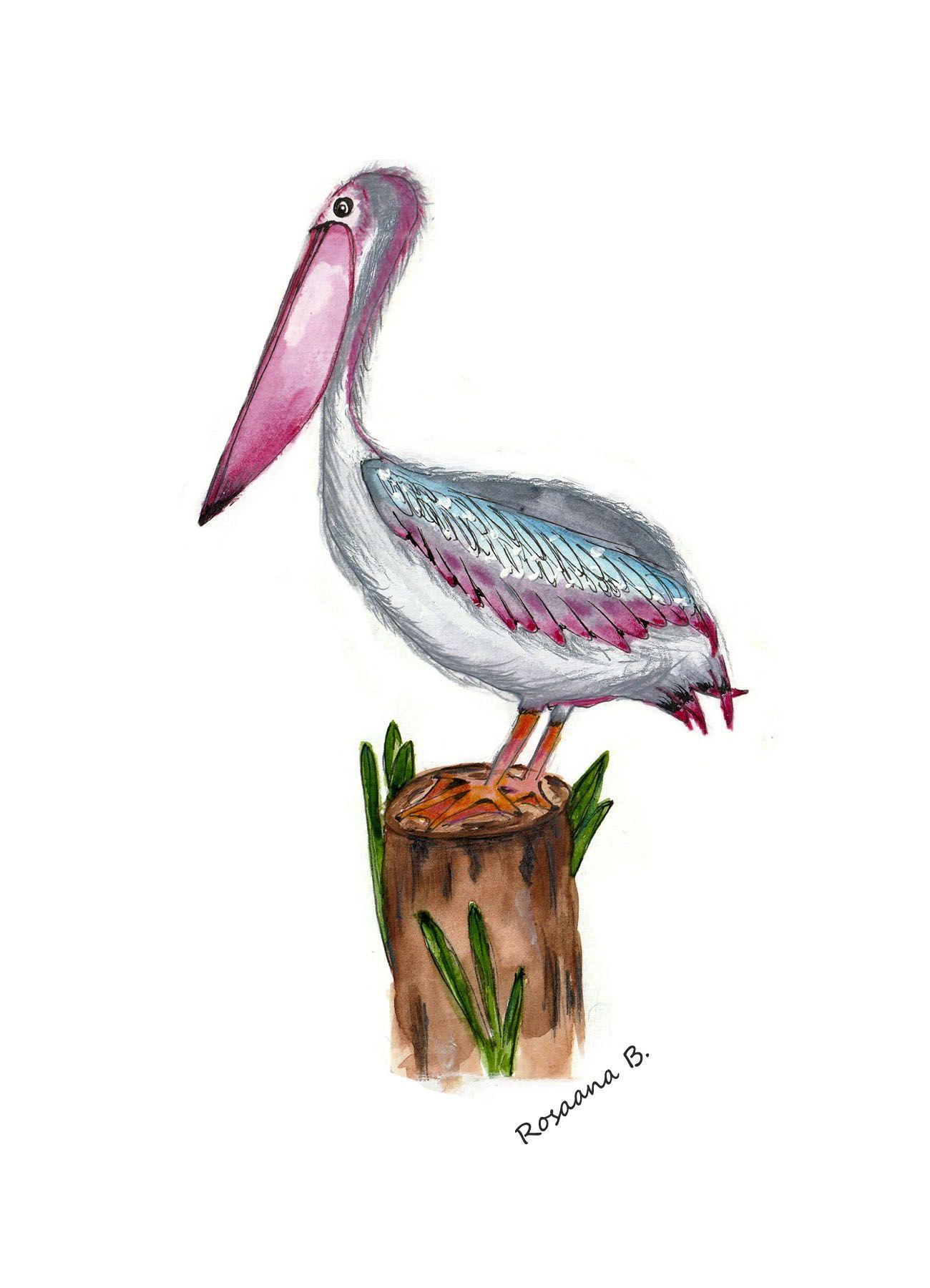 Pelicano Ilustrado Con Acuarelas Y Lapices Acuarelables Lapices De Acuarela Acuarela Pelicano Dibujo