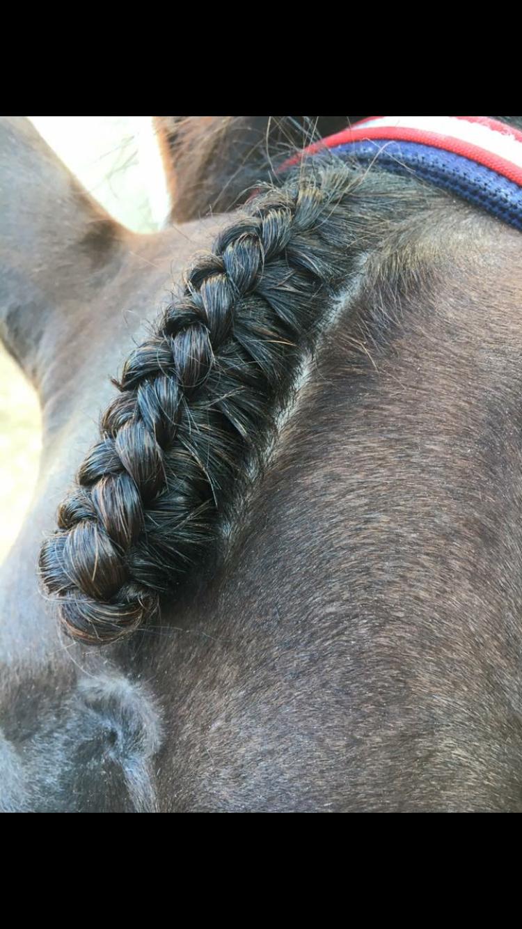 Forelock braid | Horse braids | Braids, Horse braiding, Horses
