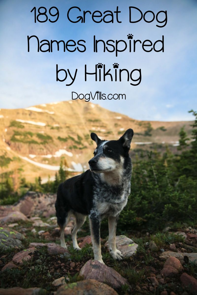 189 Outstanding Hiking Dog Names For Males Females Cute Names