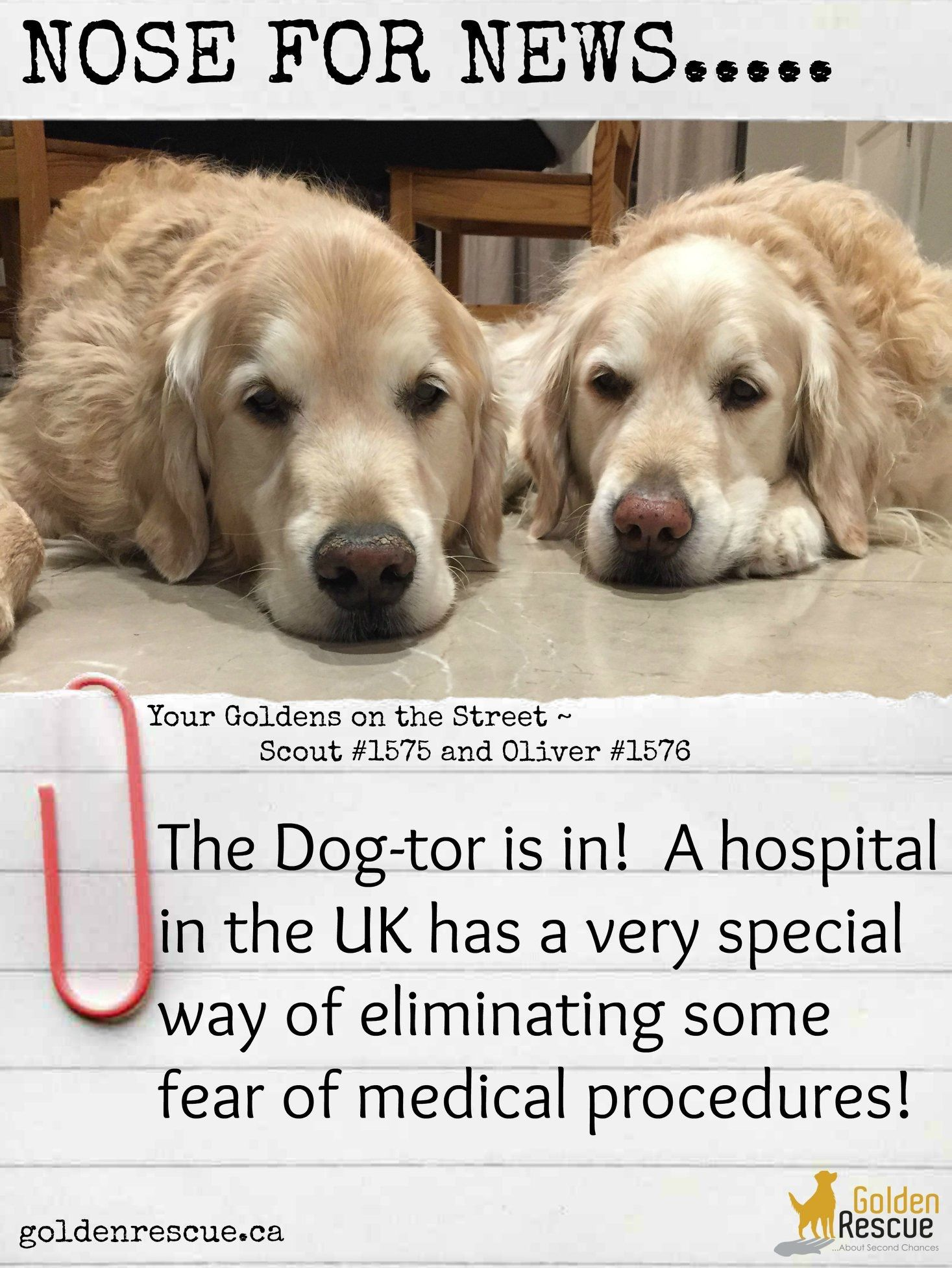 Therapy Dog Tors Show Sick Kids That Medical Procedures Aren T Something To Be Afraid Of In 2020 Therapy Dogs Dogs Dog Health