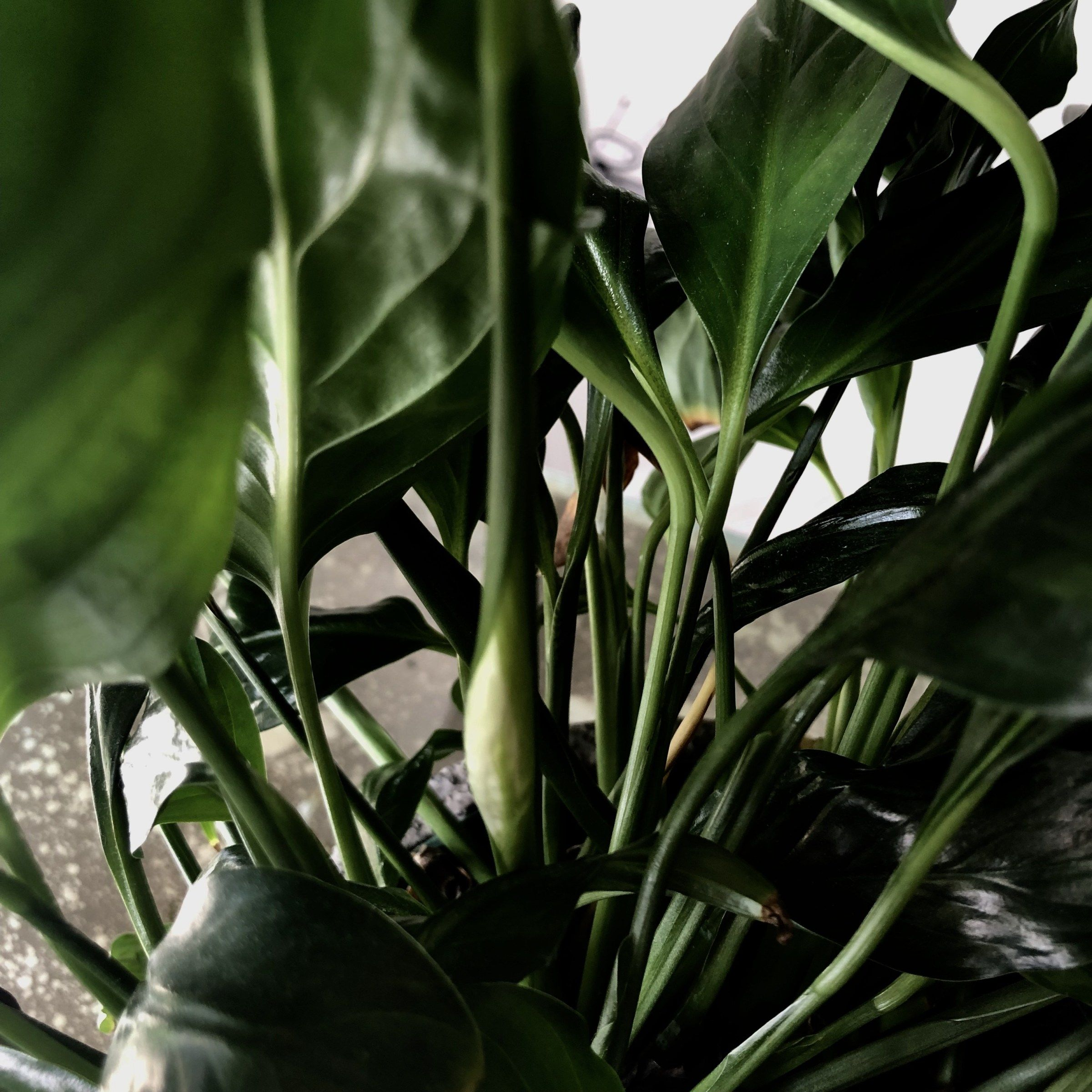 10 NASAapproved Air Purifying Houseplants and 4 other