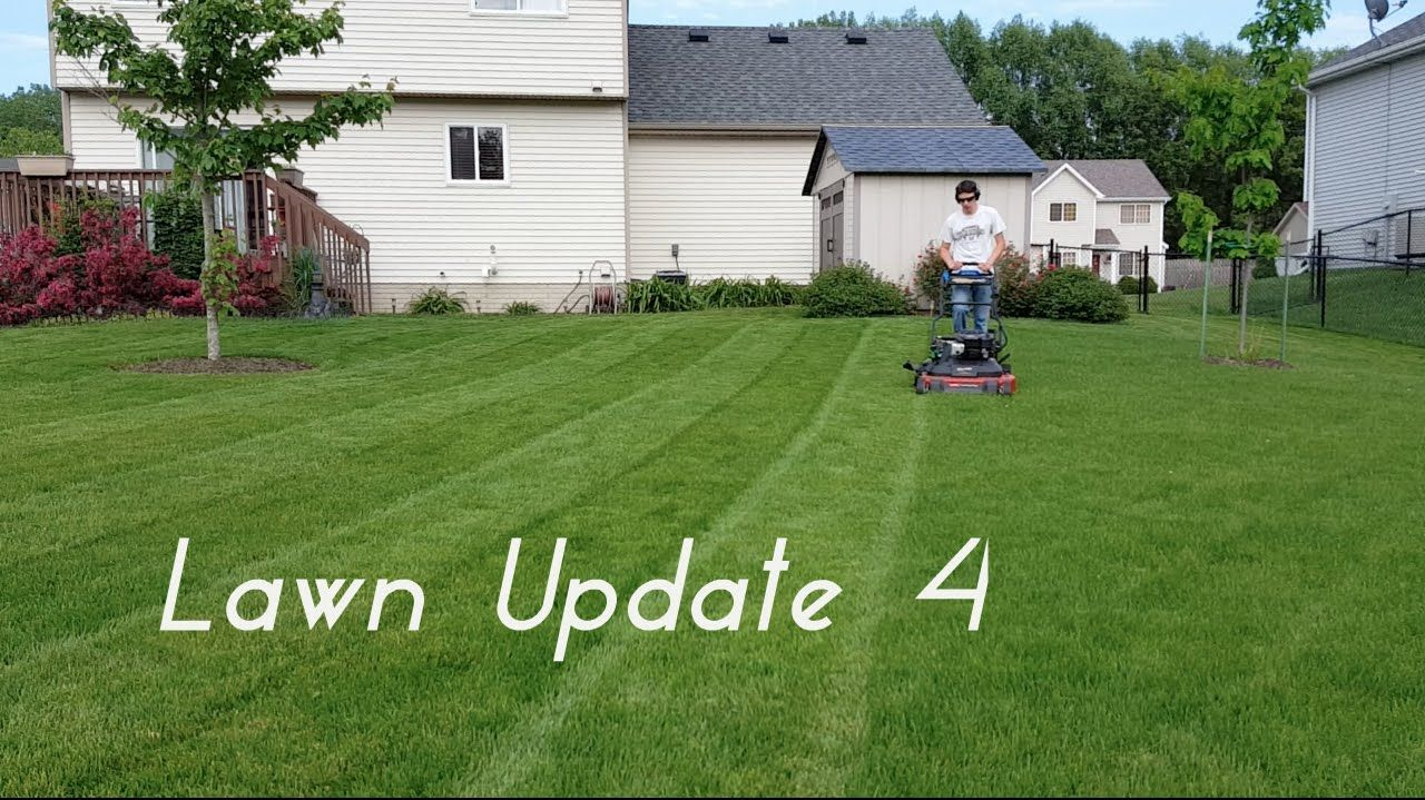 Lawn Update 4 Proof that Aeration Works, More Mowing and