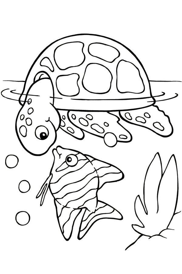 Summer Turtle Coloring Pages