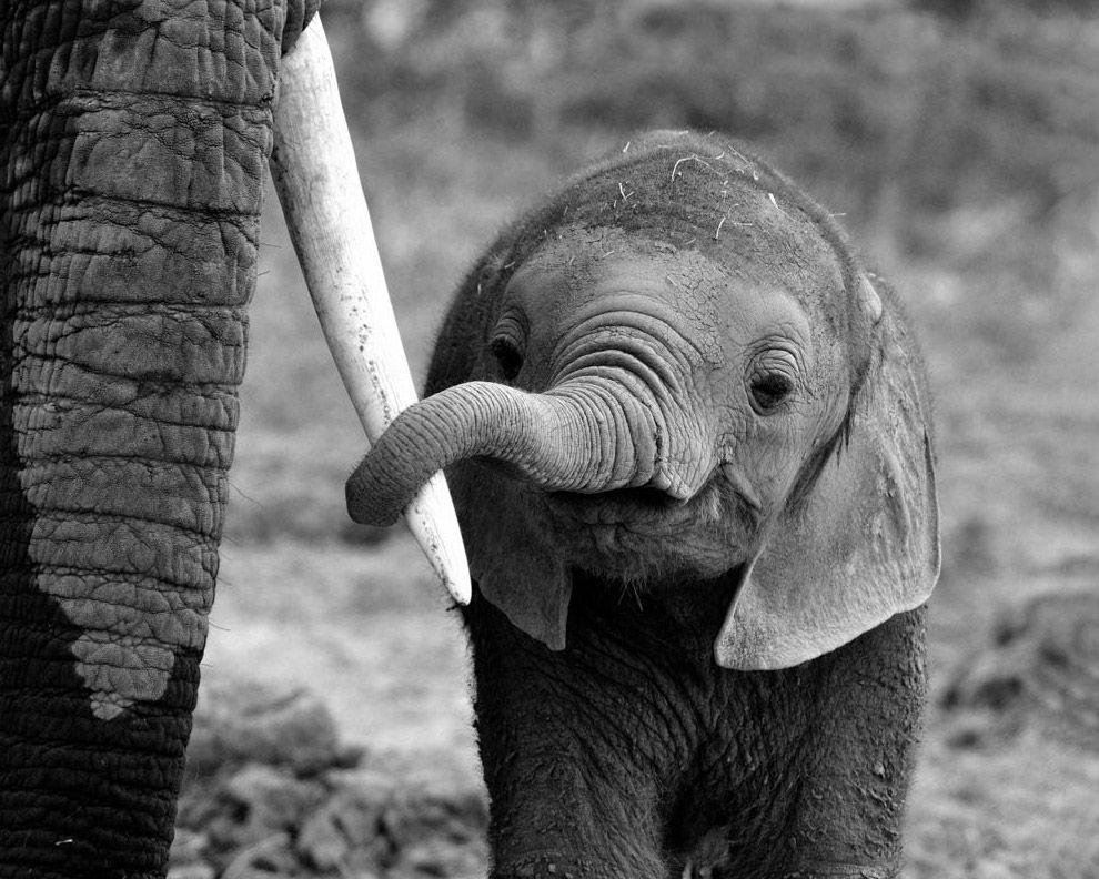 картинка милого слона комментирует новости