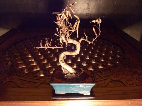 Ninja Japanese character bonsai tree (by Deadly Mist Industries)