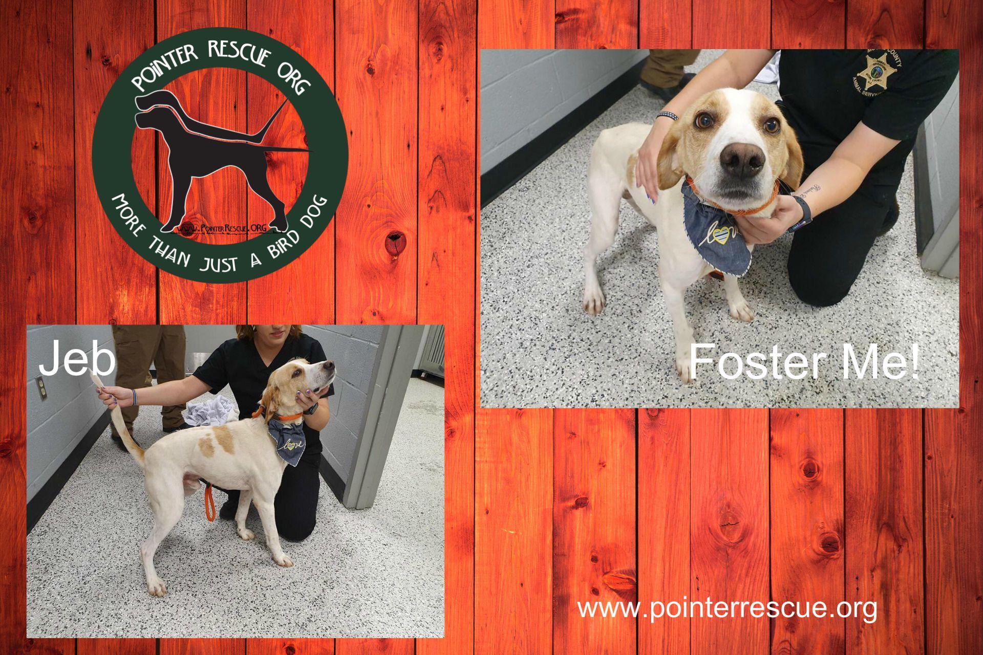 Adopt Needs Foster Jeb Nc On Adoption Pet Day Save A Dog