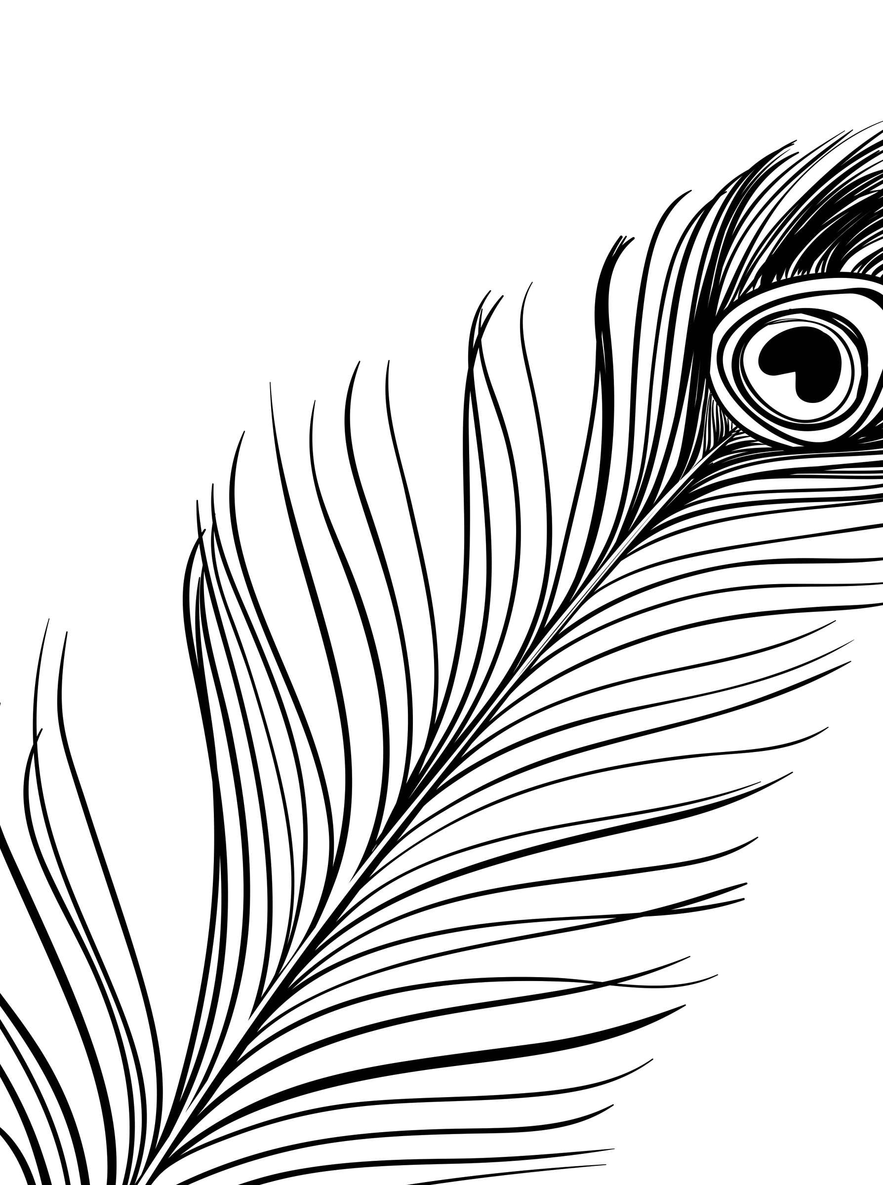Feather Line Drawing