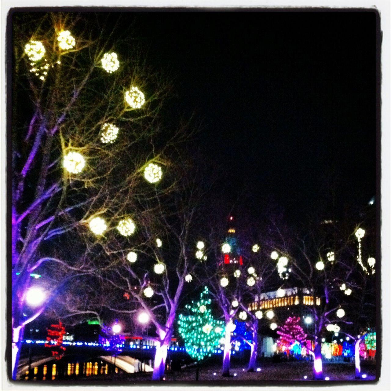 Christmas Lights At The Zoo Columbus Ohio Zoo Lights Pretty Trees Ohio
