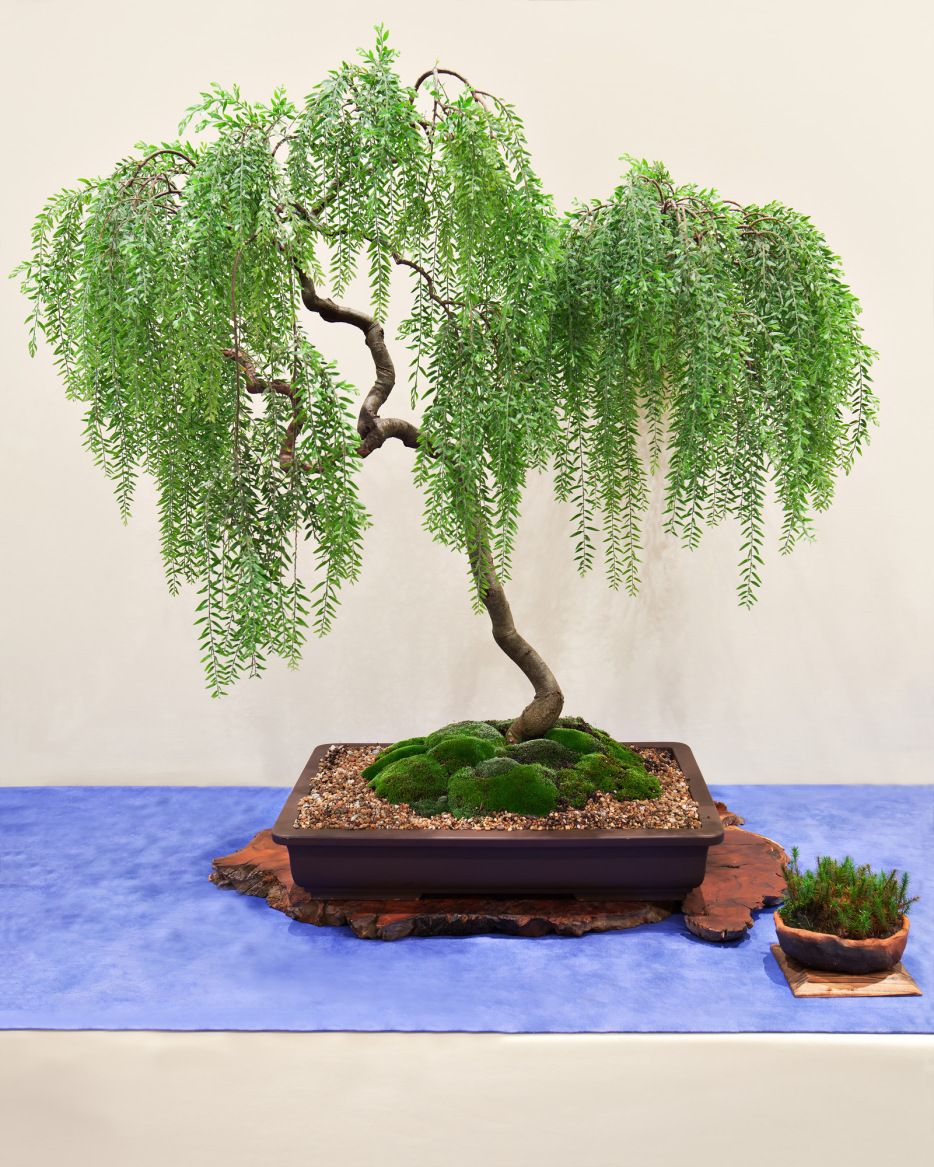IMG_8175_medResPrint Bonsai tree care, Bonsai art