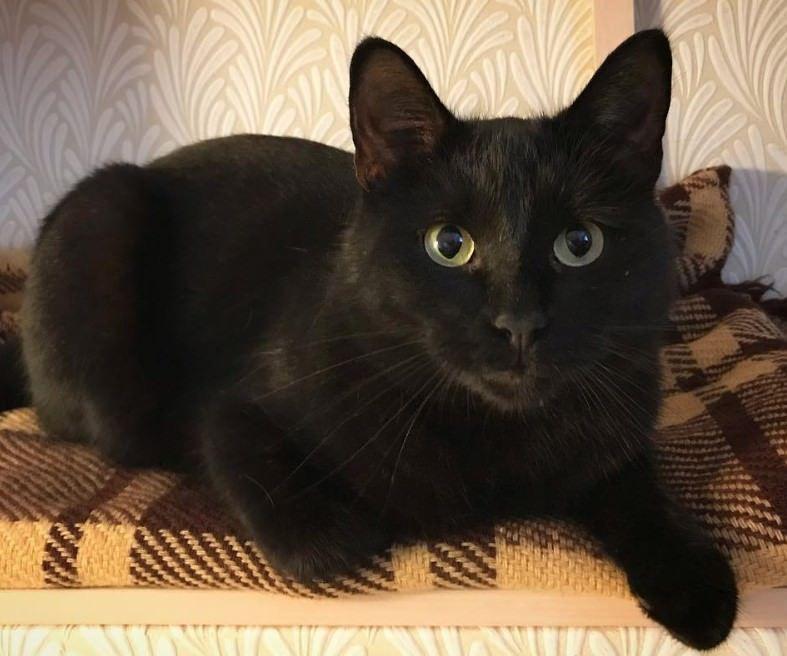 40 Witch Cat Names I Gatti Conquisteranno Il Mondo