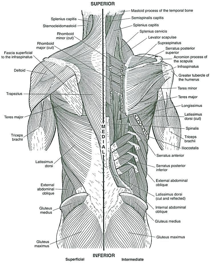 - Pin On Body Language