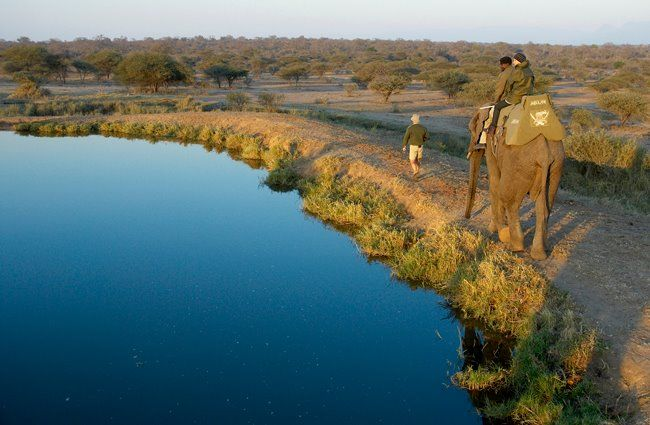 What a way to see the wildlife - Shem Compion