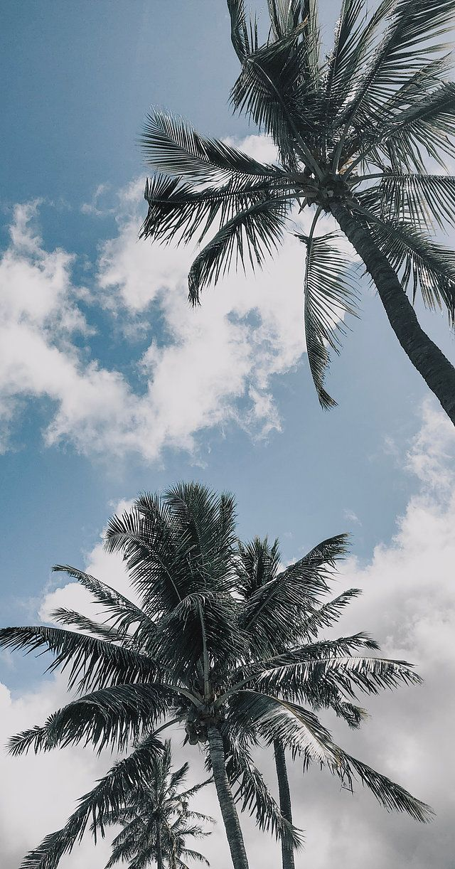 Travel Blog | Honeymoon Hangover