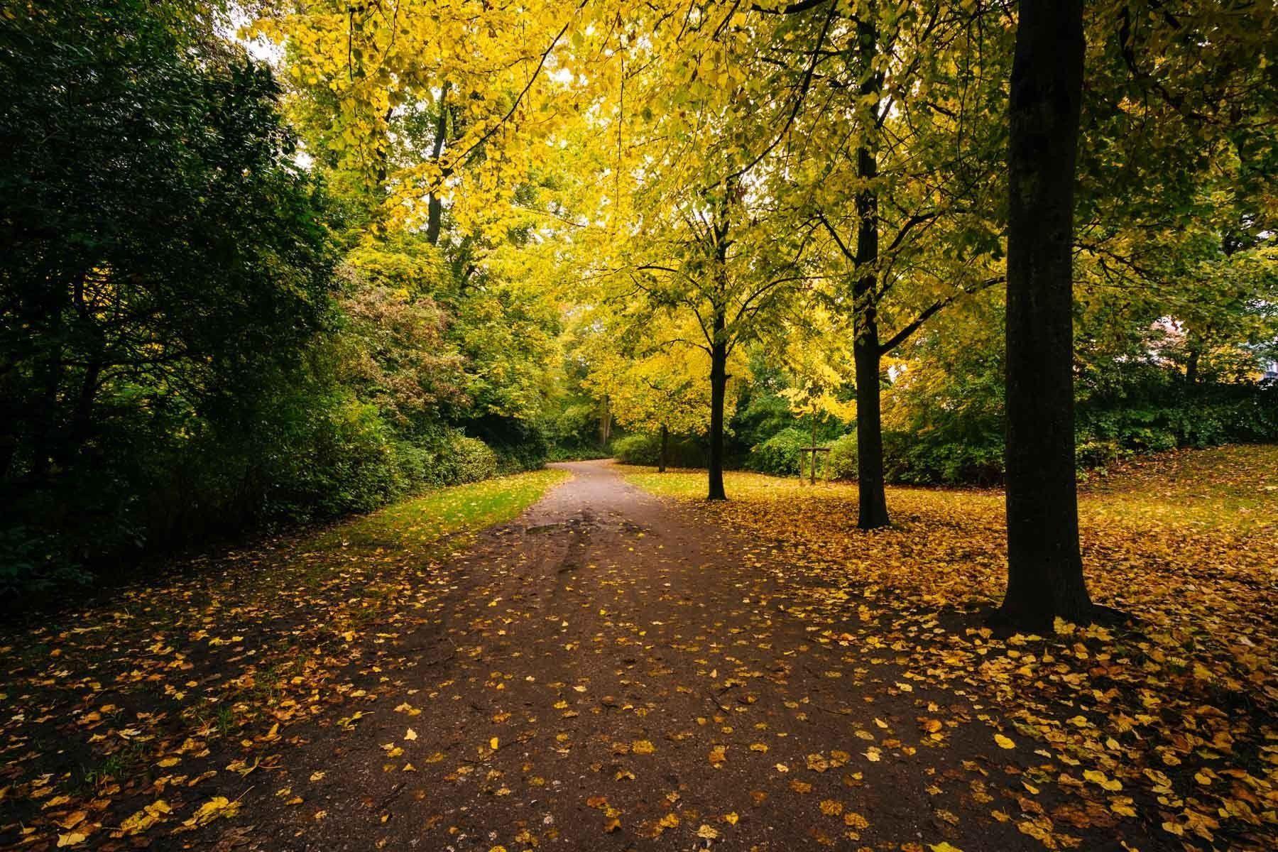 Autumn color along a walkway at ?—stre Anl?_g, in Copenhagen ...