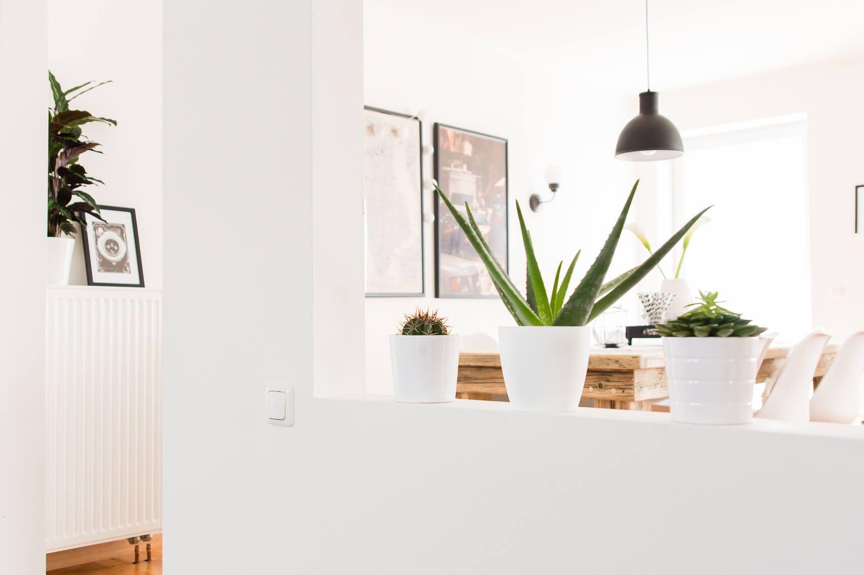 5 tipps f r zimmerpflanzen pflege deko minimal. Black Bedroom Furniture Sets. Home Design Ideas