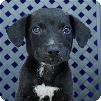 Pin By Glenda On Dogs Pets Dogs Pet Adoption