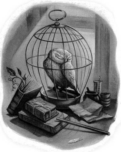 Illustration of Hedwig