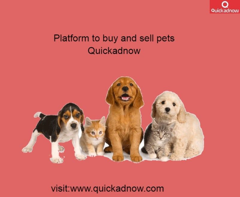 Now Buy And Sell Pets Online Different Breeds And At A Good
