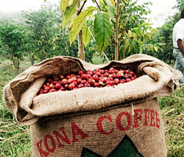 Image result for history of kona coffee
