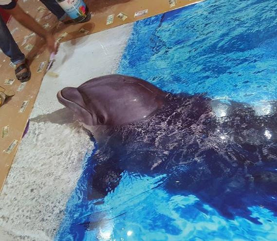 Image Gallery For Website d bathroom flooring installation d dolphin floor d epoxy floors