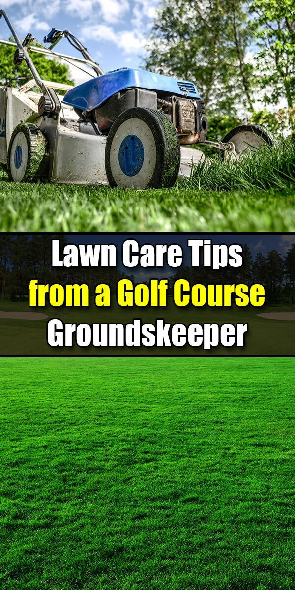 Green Lawn Care Tips and a Secret Lawn Tonic Recipe from a Golf Course Groundskeeper - Golly Gee Gardening